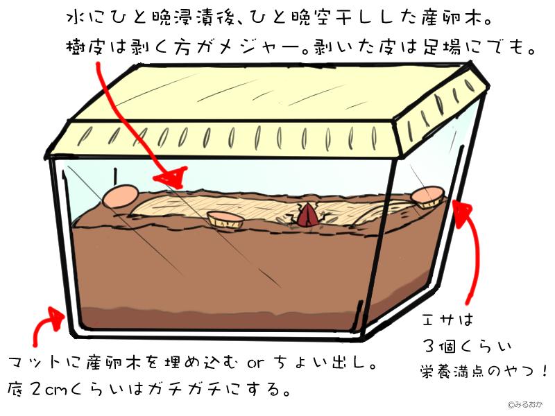 クワガタ 産卵 セット
