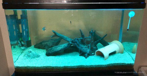 ブラックゴーストの水槽(手作りブルーライト)