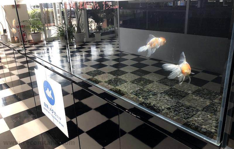 チャーム館林淡水魚コーナー2