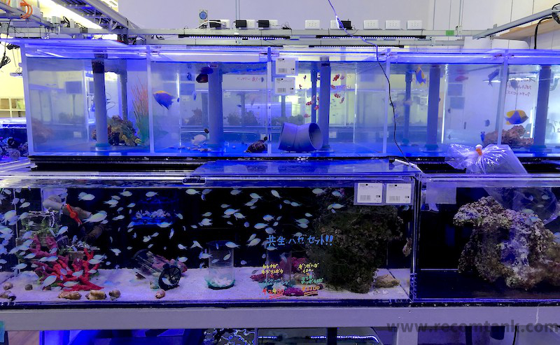 チャーム館林海水魚コーナー